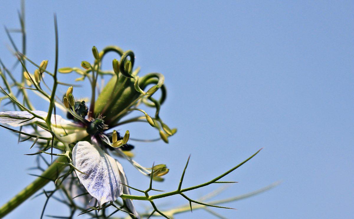 summer, flower, leaf, nature, plant, tree, blue sky, pistil, ecology