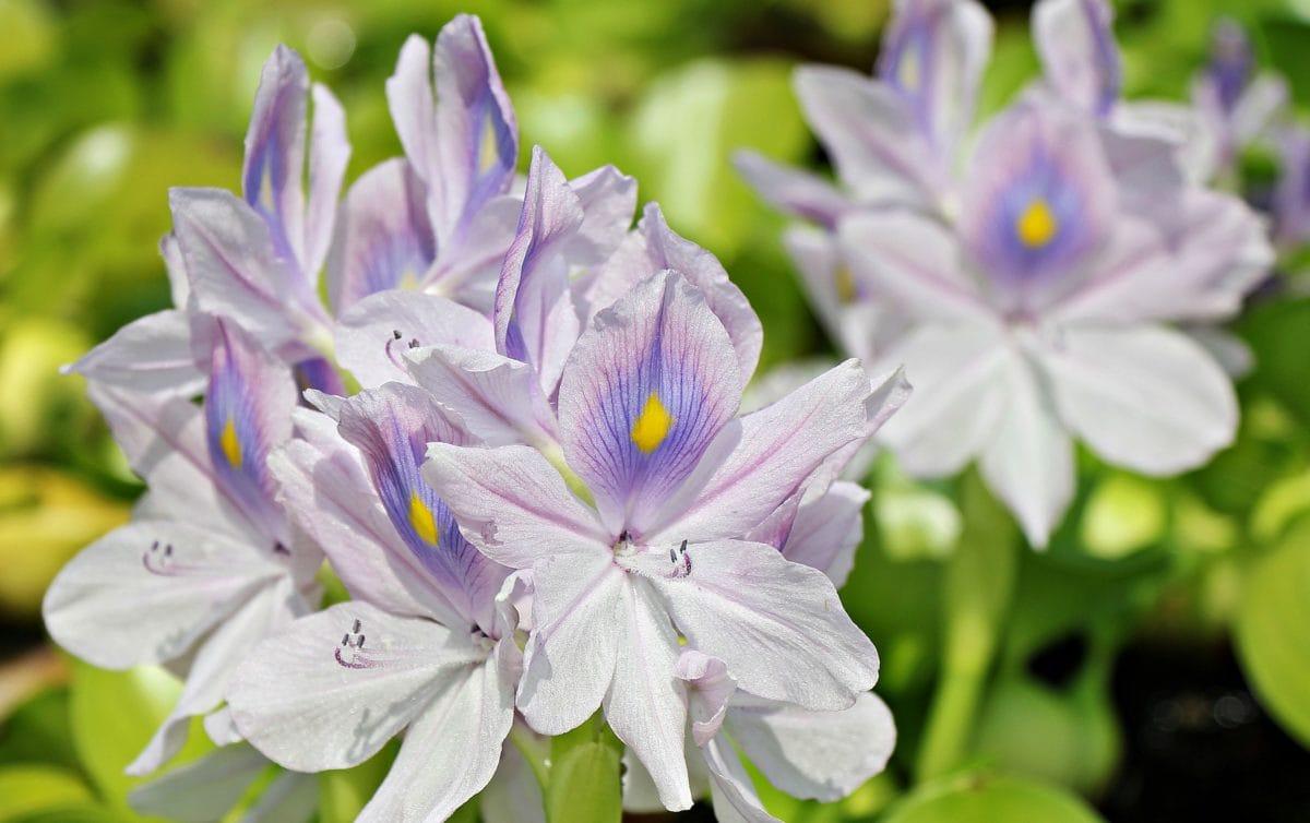 nature, flower, garden, leaf, petal, summer, plant, blossom
