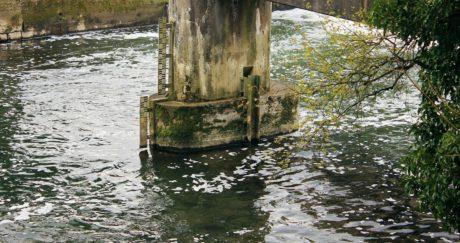 water, nature, river, bridge, pillar, concrete, tree