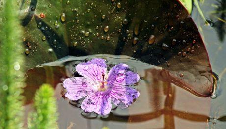 różowy kwiat, natura, ogród, roślina, ogrodnictwo, ekologia, słupek