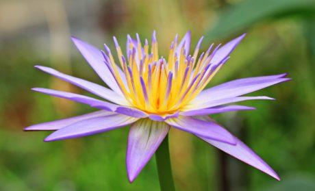 花、庭、自然、蓮、葉、夏、植物、ハーブ