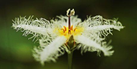fiore, natura, pianta, erba, giardino, fiore