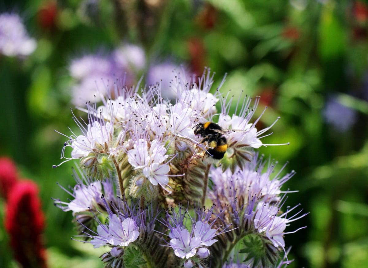 flower, summer, garden, nature, plant, herb, blossom, insect