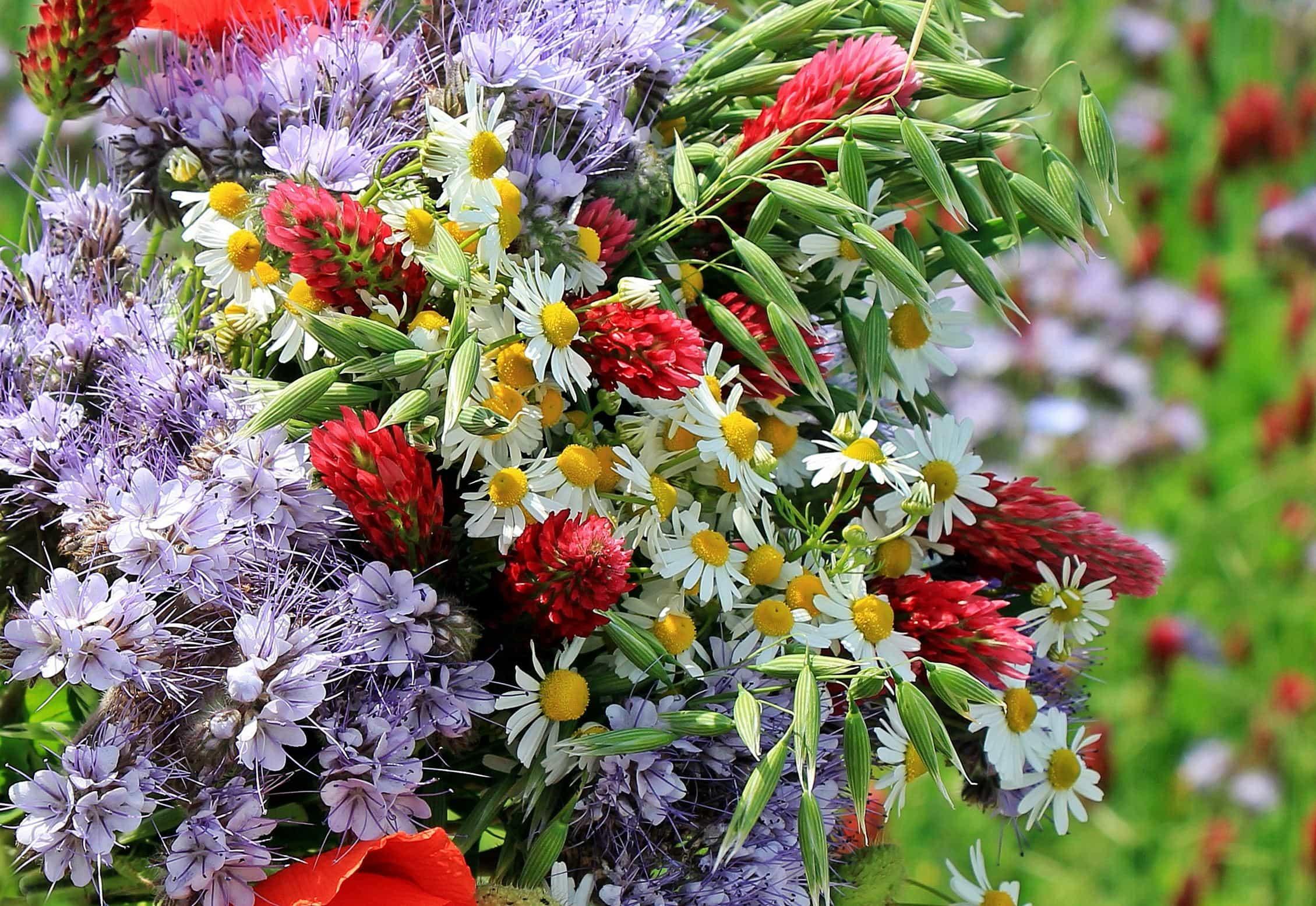 Днем, открытки с букетами полевых цветов красивые