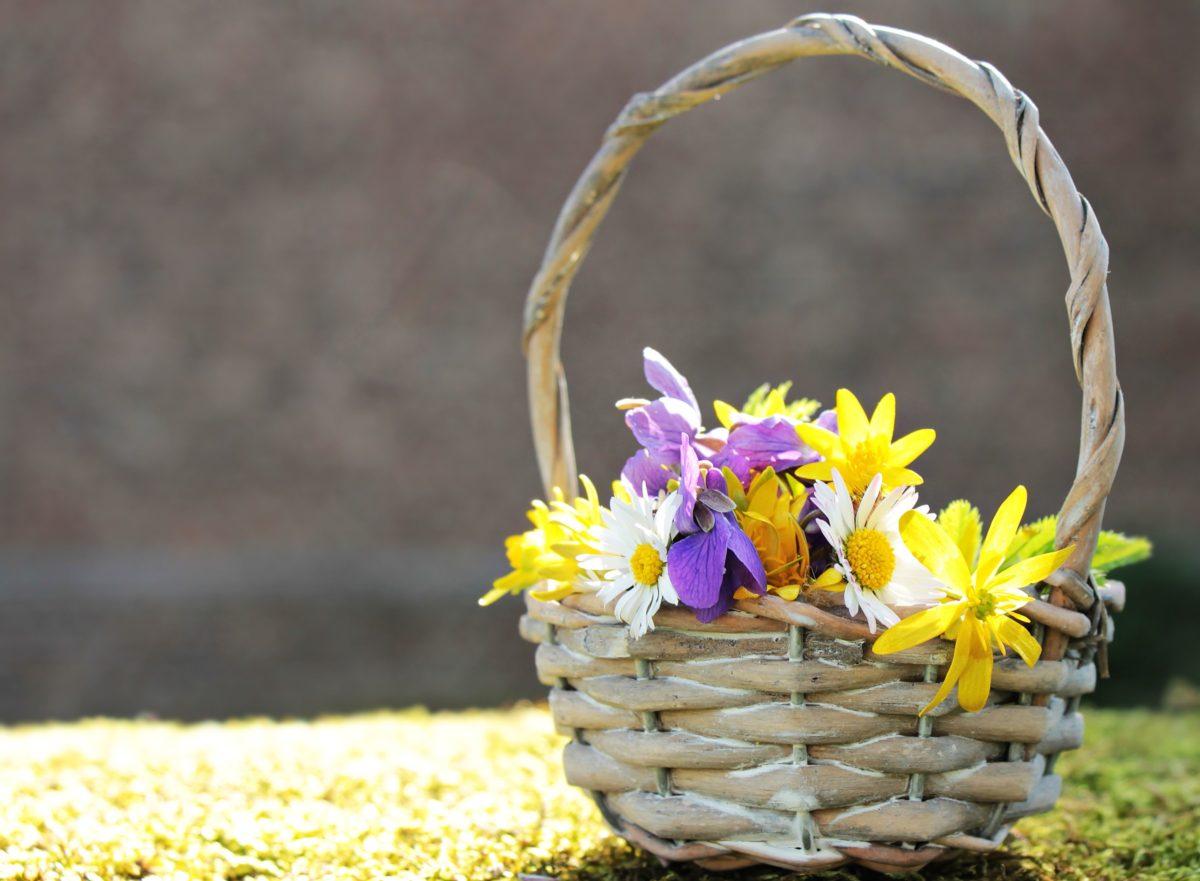 flower, summer, nature, leaf, sunflower, plant, basket, blossom