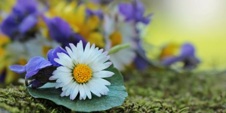 daisy, daylight, flower, summer, leaf, nature, garden, plant, blossom, petal