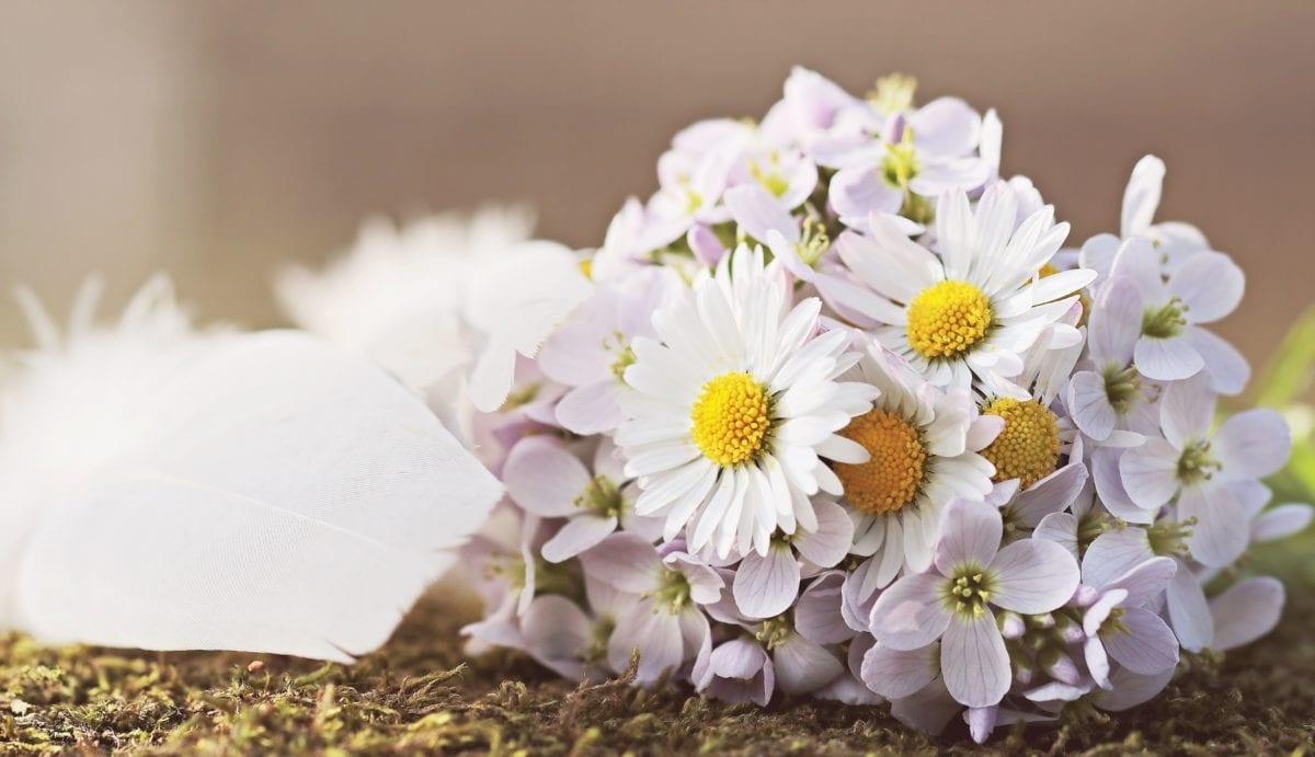 flower, nature, plant, blossom, petal, garden, bloom