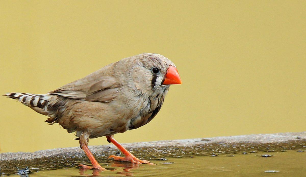 animal, bird, wildlife, nature, beak, feather, wild