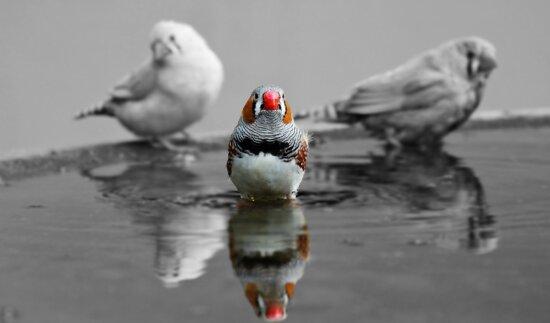 animal, fauna, pájaro, pluma, pico, agua