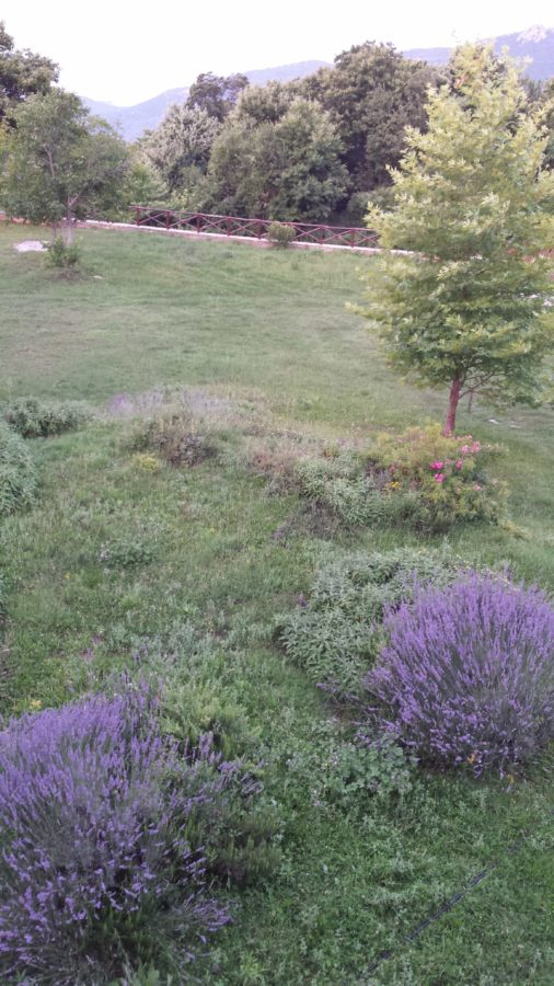 garden, tree, grass, field, landscape, flower, nature, plant