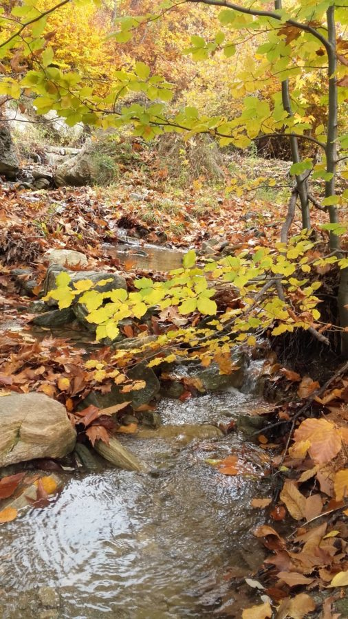 stream, leaf, wood, river, nature, water, tree, landscape