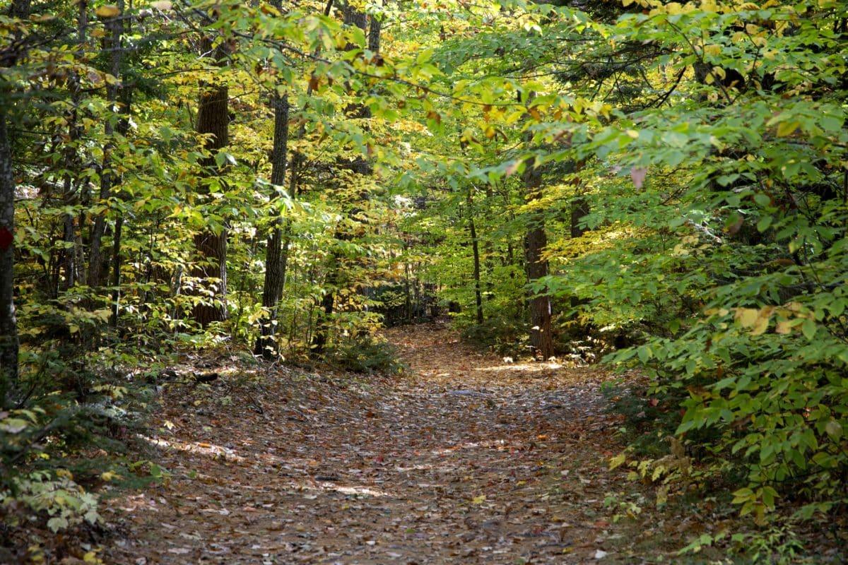 stablo, zeleni list, priroda, drvo, krajolik, šuma, biljka, trava