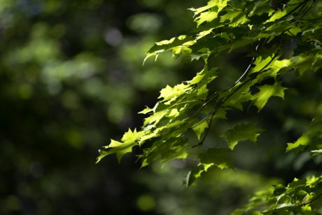 green leaf, environment, tree, branch, nature, summer, sunshine, wood