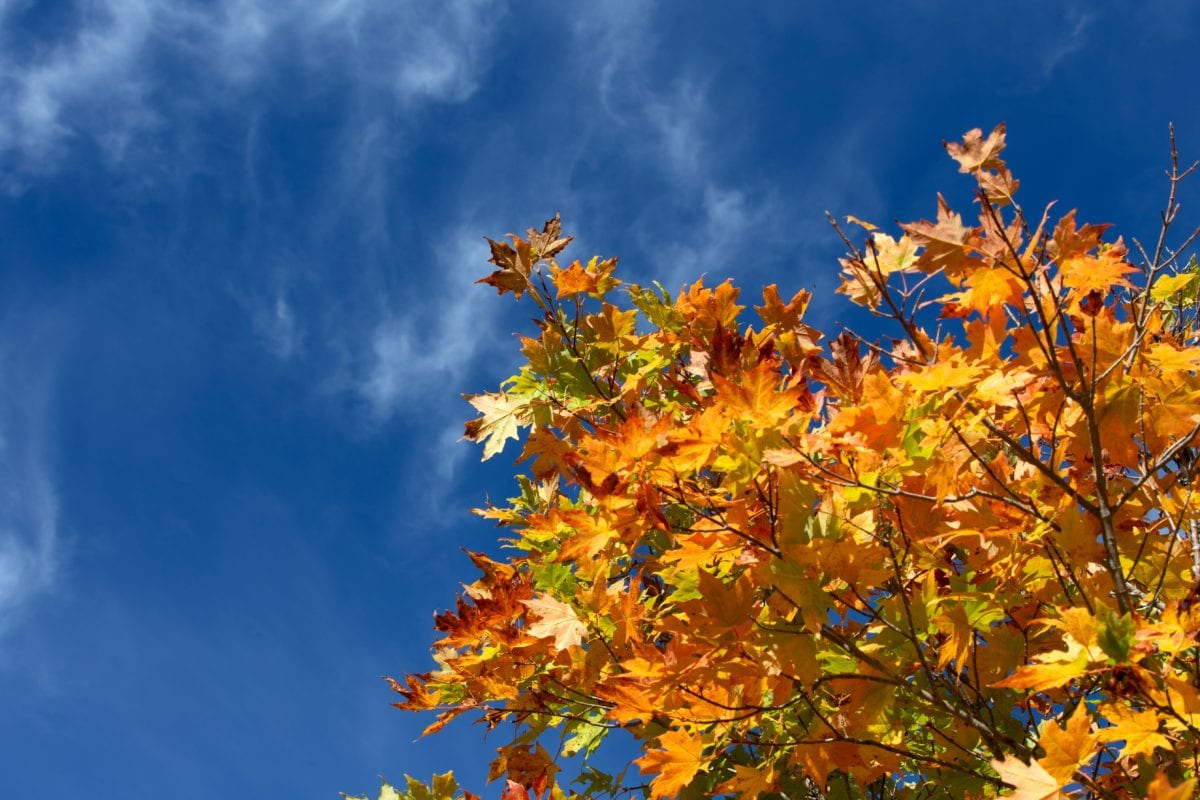 nature, leaf, tree, autumn, plant, forest, blue sky, outdoor