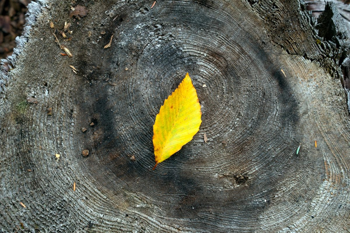 leaf, yellow, wood, nature, tree, daylight, outdoor