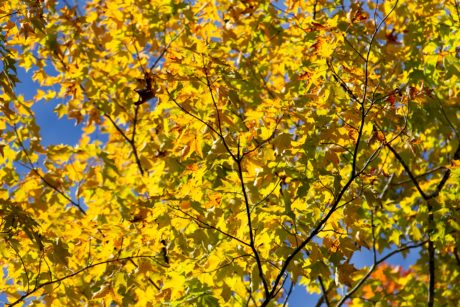 tree, branch, nature, leaf, autumn, plant, forest, foliage