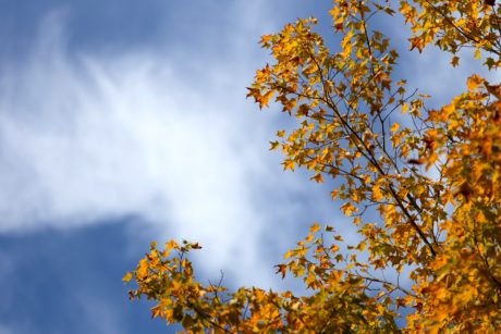 tree, wood, nature, leaf, branch, autumn, plant, forest, blue sky