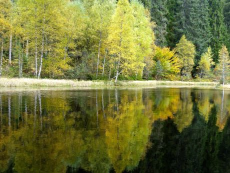 wood, water, tree, nature, leaf, lake, landscape, poplar