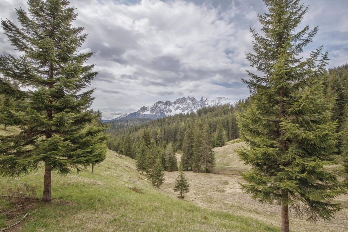 dřevo, příroda, Evergreen, jehličnan, krajina, strom, borovice, Hora