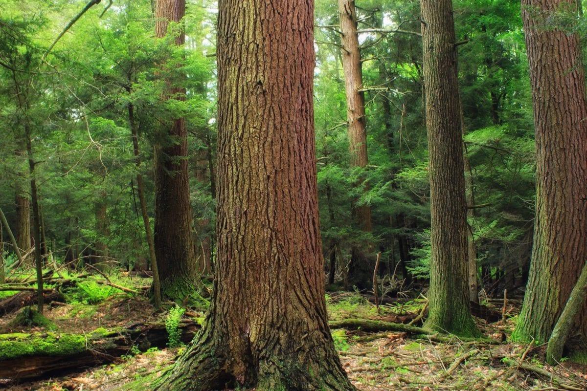 wood, conifer, landscape, tree, nature, leaf, forest, plant, outdoor