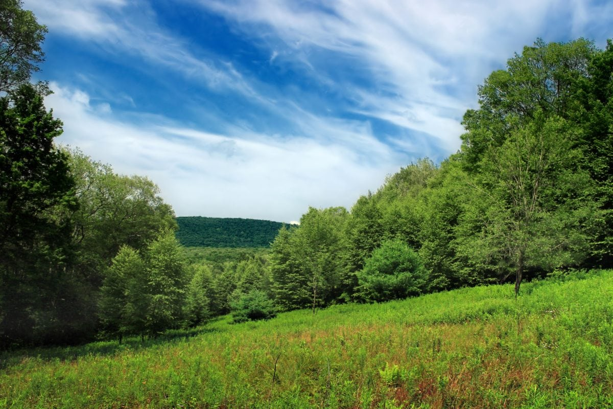 wood, hillside, nature, tree, countryside, landscape, grass, summer