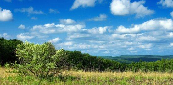 blue sky, landscape, tree, nature, grass, field, meadow, land