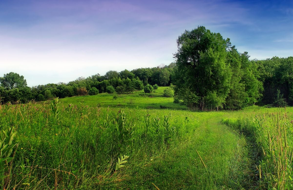 Sommer, Landschaft, Gras, Natur, Baum, Feld, Wiese, Landwirtschaft