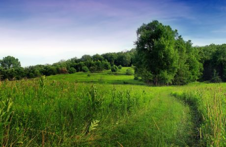Лето, пейзаж, трава, природа, дерево, поле, луг, сельское хозяйство