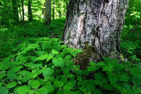 nature, environment, wood, tree bark, green leaf, plant, forest, landscape