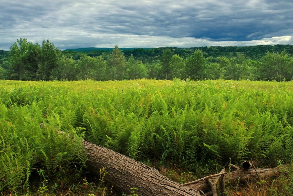 fern, agriculture, landscape, nature, field, green grass, meadow