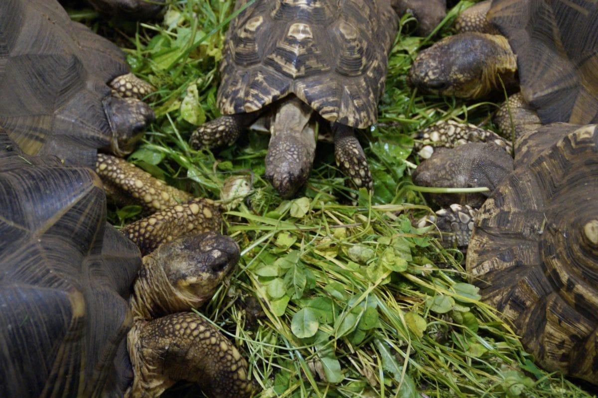 brnění, želva, příroda, hnědá želva, plaz, zelená tráva
