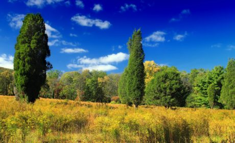 blue sky, nature, wood, tree, landscape, grass, summer, forest