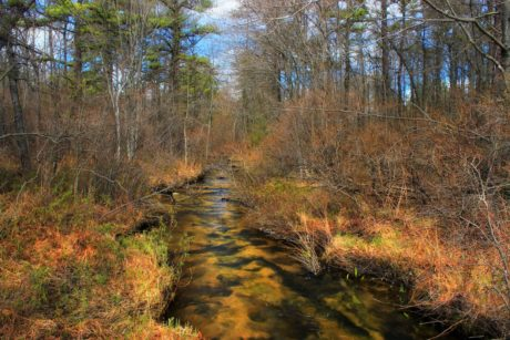 wood, landscape, nature, river, autumn, water, tree, forest, wilderness