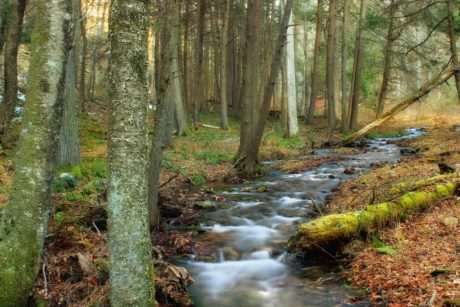 water, tree, landscape, moss, river, wood, stream, nature, leaf
