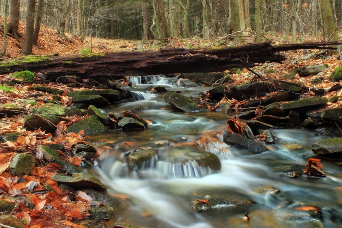 voda, krajolik, priroda, drvo, stablo, potok, Rijeka, list