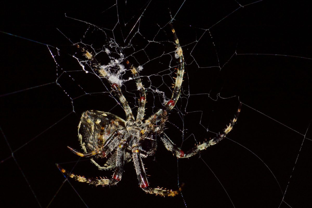 kukac, opasnost, fobija, paučina, pauk, spiderweb, tama