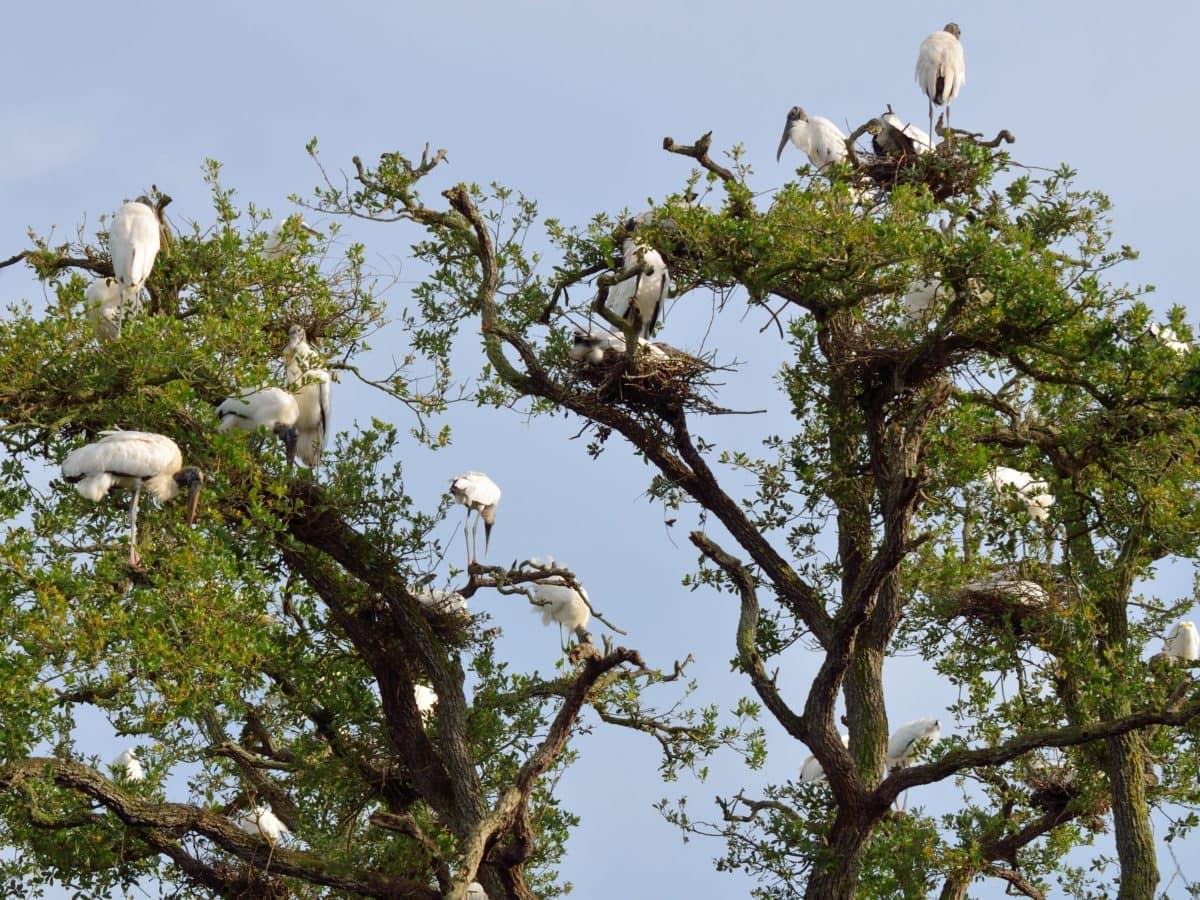 copac, mediu, faunei sălbatice, Flock, cerul albastru, natura, animal, pasăre