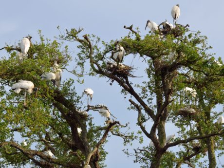 tree, environment, wildlife, flock, blue sky, nature, animal, bird