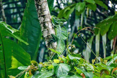 дъждовна гора, листа, природа, джунгла, околна среда, дърво