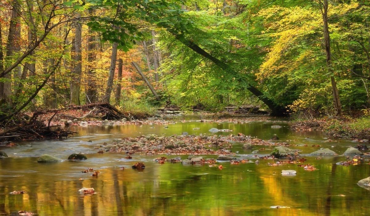 tree, leaf, landscape, river, wood, nature, water, forest