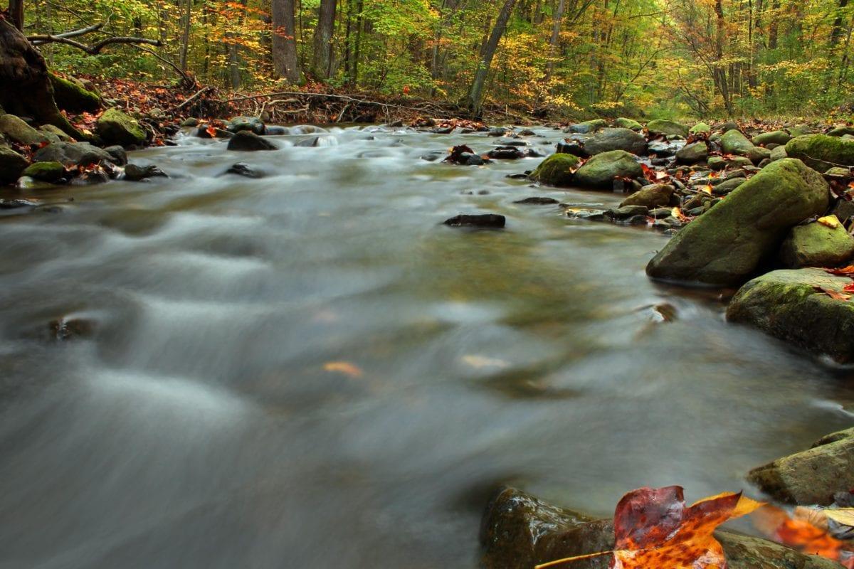paisaje, arroyo, hoja, arroyo, río, agua, madera, piedra