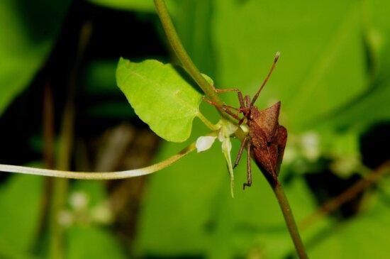 nature, feuille verte, insecte, herbe, arthropode