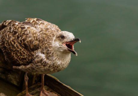 птица, животное, природа, дневной свет, дикий, дикая природа, клюв, перо, Чайка