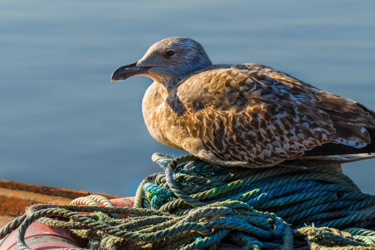 seagull, sea, bird, wildlife, water, nature, coast, daylight, beak, waterfowl