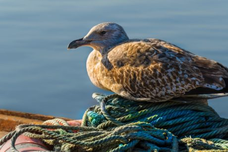 seagull, sea, bird, wildlife, water, nature, coast, daylight, beak, waterfowl