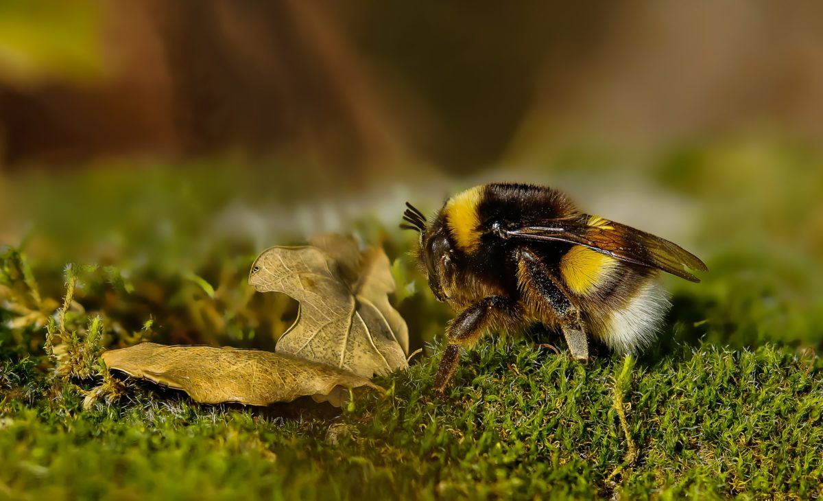 nature, insect, grass, bee, plant, flower, arthropod, herb, moss