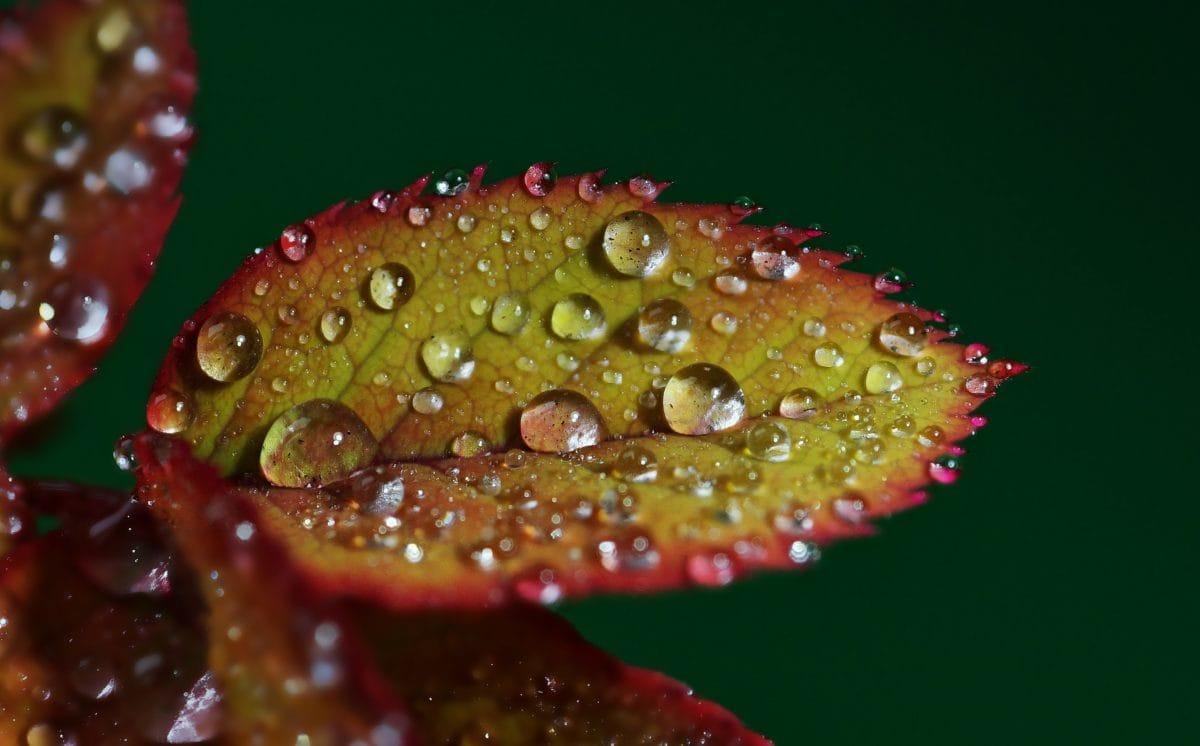 natuur, regen, groen blad, dauw, organisme, vocht, schaduw, macro