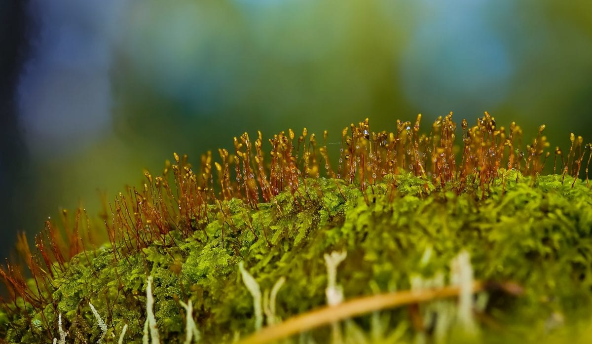nature, green grass, leaf, herb, plant, moss, foliage, detail