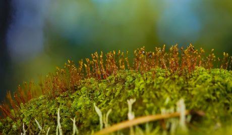 природа, зелена трева, листа, билка, растение, мъх, зеленина, детайл