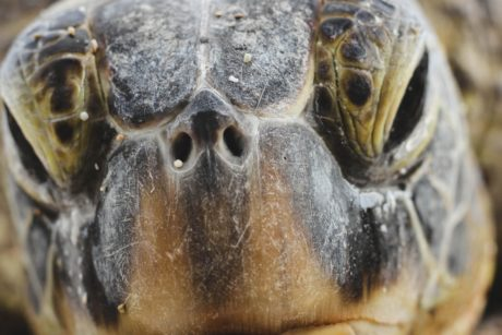 turtle, head, animal, tortoise, reptile, detail, nature,